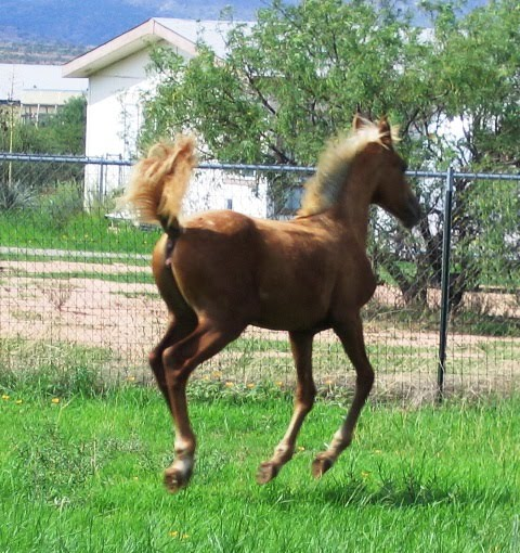 Nutrient Requirements of Horses and the