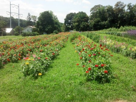 Flowers at Rock Hill Orchard July 2015