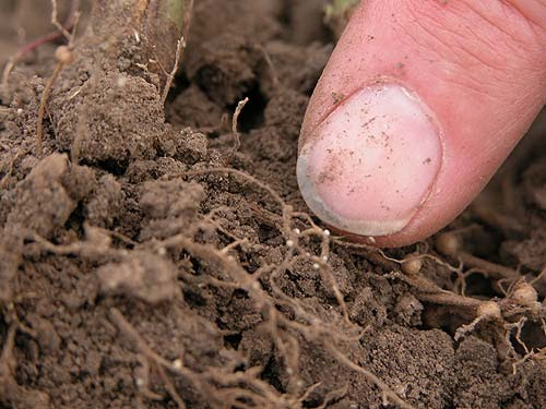 Habitat roundworms for Living things found in soil