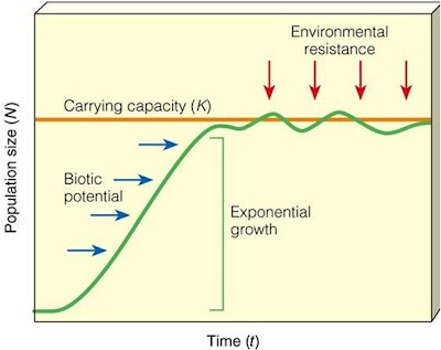 relationship between biotic potential environmental resistance and carrying capacity