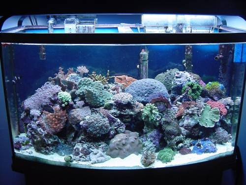 Your pets online 1 way for your saltwater aquarium setup for Cloudy water in fish tank solutions