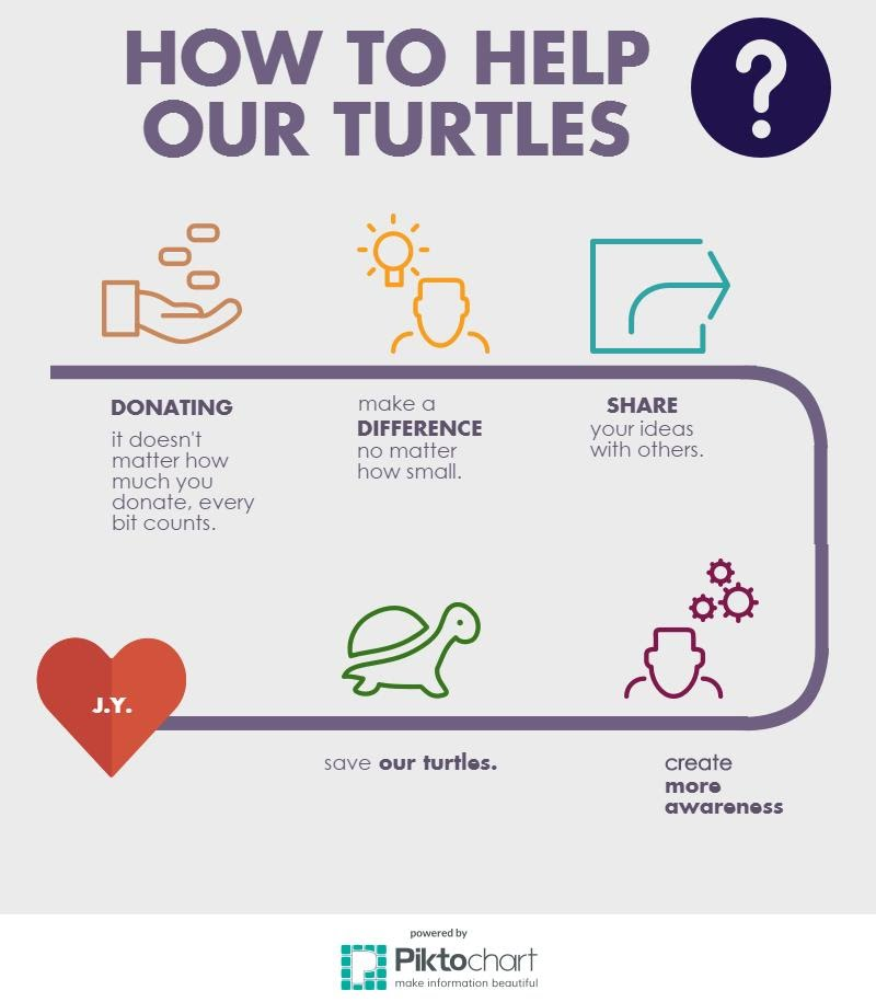 Organizations Save Our Turtles