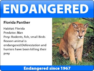 florida panther essay The florida panther is an example of a species currently at risk to extinction population growth will be the easiest and first way to tell the bands are working in nature's favor this predator needs prey, and its prey needs water.