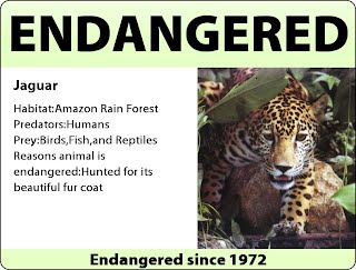 endangered species report jaguar