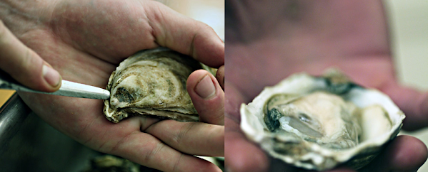 oyster wine pairing