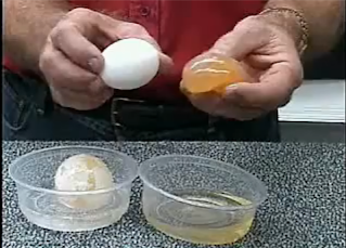 ️ Osmosis demonstration with a raw egg. osmosis lab report ...
