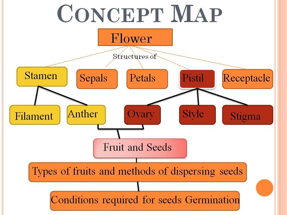 Flower Concept Map.Concept Map Sexual Reproduction In Plants