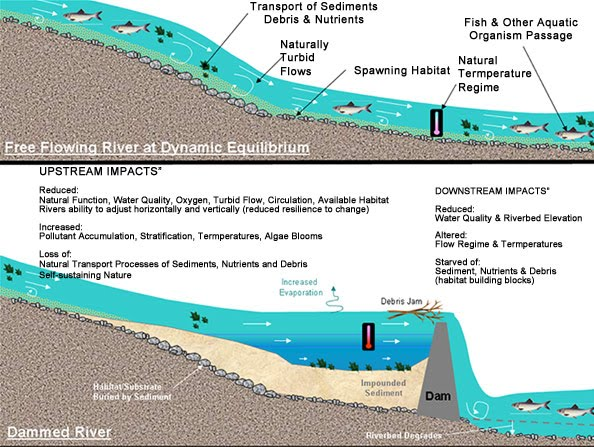 impact of large dams river Of impacts, positive and negative, large dams can  around the impacts of large  dams are discussed m  eg dams built on large transboundary rivers, having.