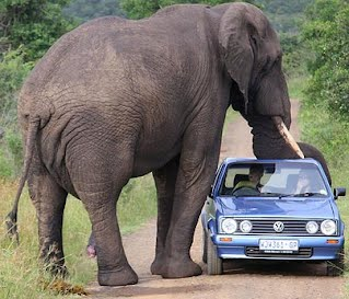 heres an example of what happens when i want to cite this picture that i found by doing a google image search for elephant