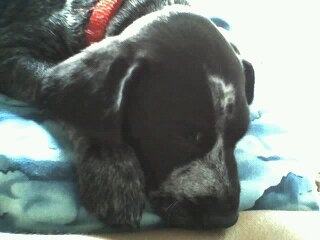 Image of puppy taking a nap