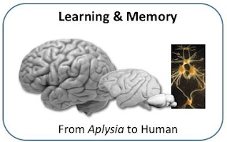Graduate course - Learning and Memory