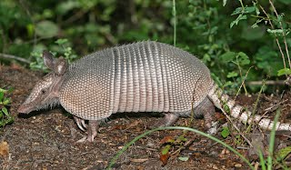 http://oakdome.com/k5/lesson-plans/powerpoint/animal-adaptations-armadillo.php