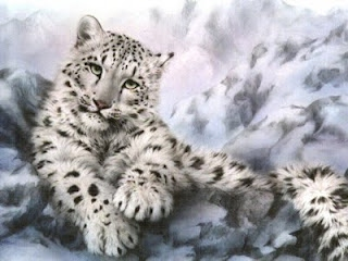 A snow leopard is the hunter in it's environment. Since they're in the cat  family, they tend to hiss and grow like a cat. Like other cats, their  behavior is ...