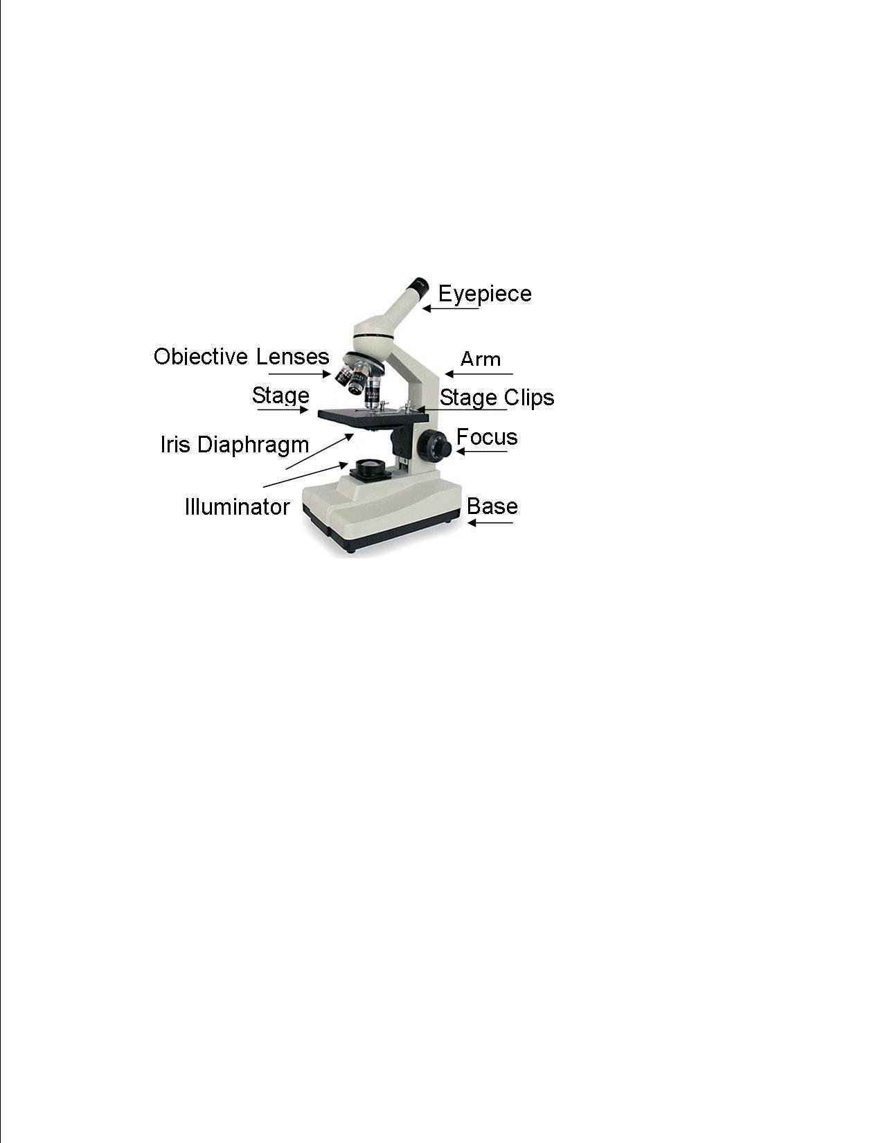 Compound Microscope Parts - Microscopes for everyday use at