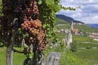 Weinberge Südtirols