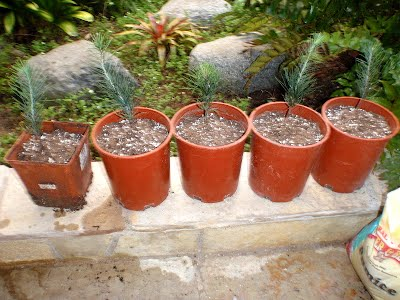 Five little seedlings