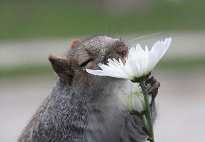 Smell flowers 3