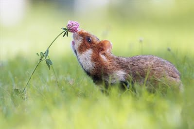 Smell flowers 8