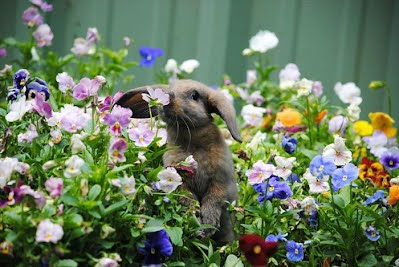 smell the flowers 4