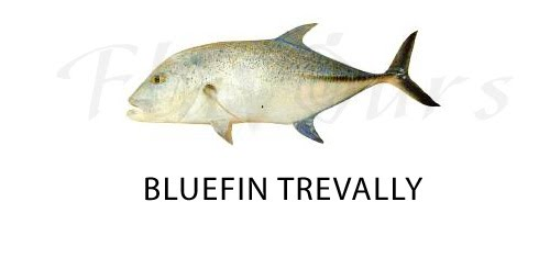 Bluefin travally