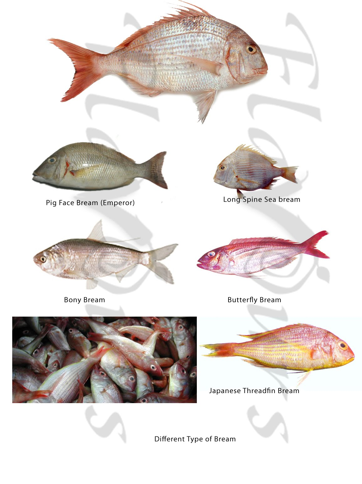 Confused Over Fish Names
