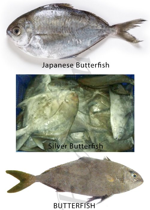 Butterfish