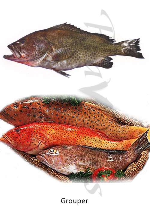 Confused over Fish names? | The treasure house of recipes