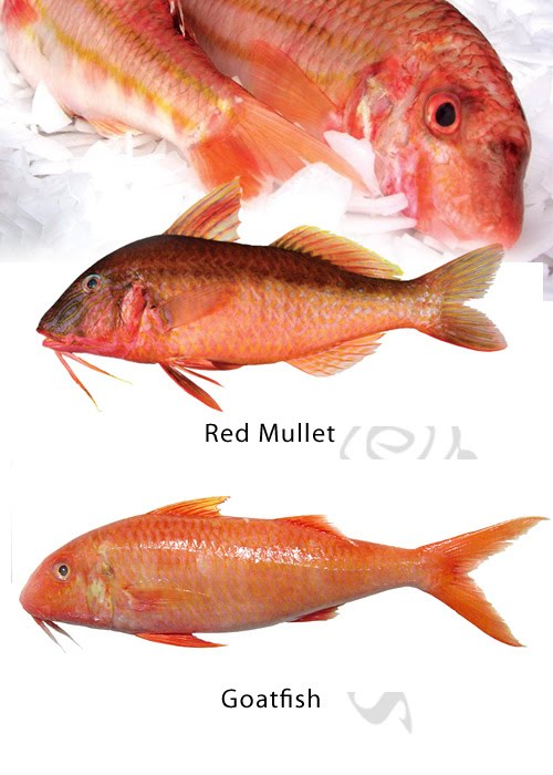 Mullet Goatfish difference  - Click for a bigger view