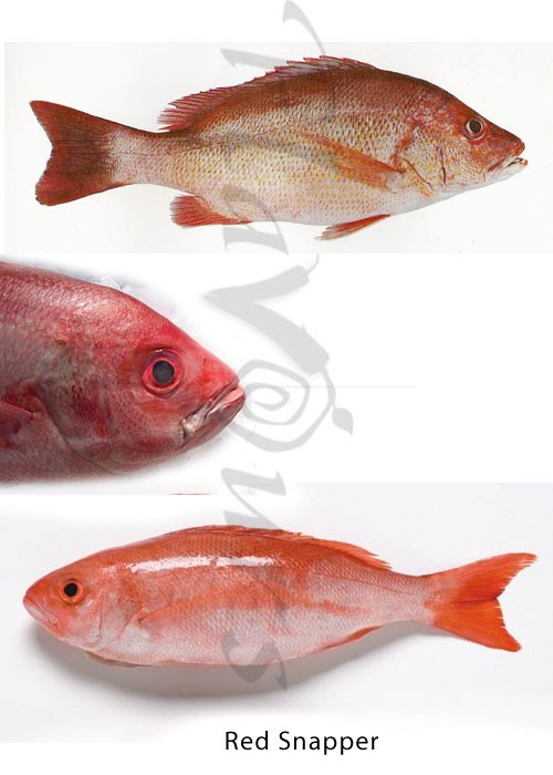 Red Snapper, Sankara - Click for a bigger view