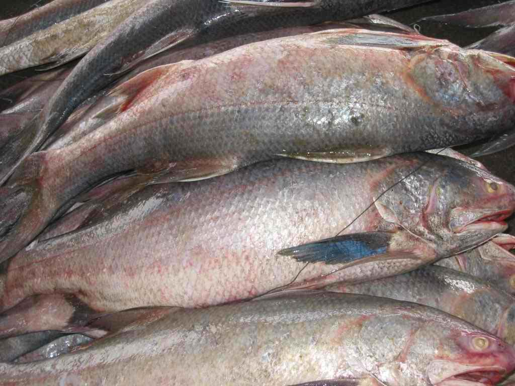 Confused over fish names the treasure house of recipes for Salmon fish images