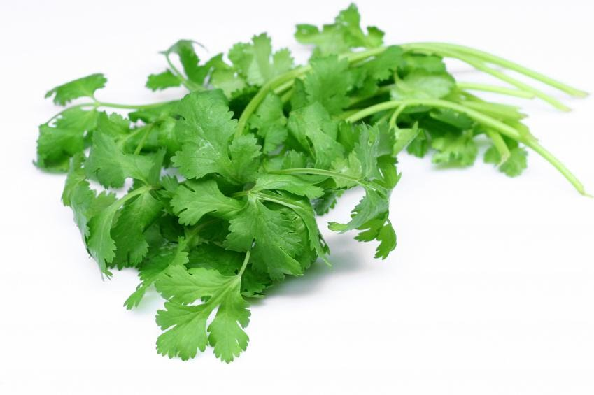 Coriander (Cilantro) leaves