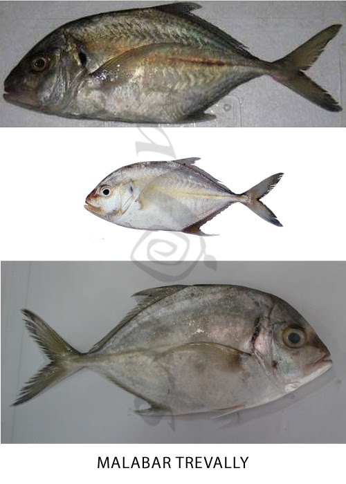 Confused over Fish names?   The treasure house of recipes