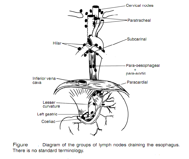 Lymphatic Drainage Of Esophagus Surgerypaper