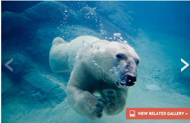 http://news.discovery.com/animals/endangered-species/video-shows-how-polar-bears-see-the-world-140609.htm