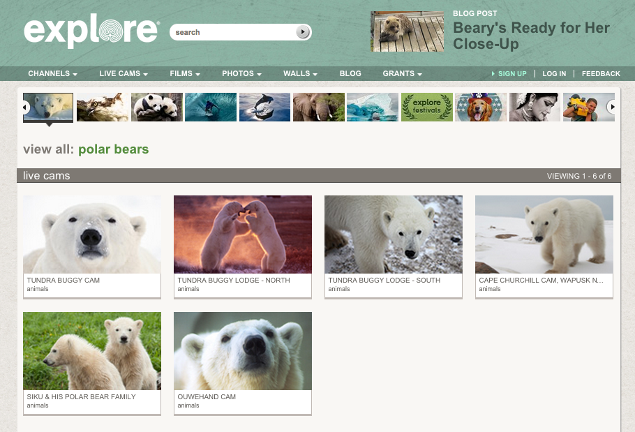 http://explore.org/channels/polar-bears/view-all/