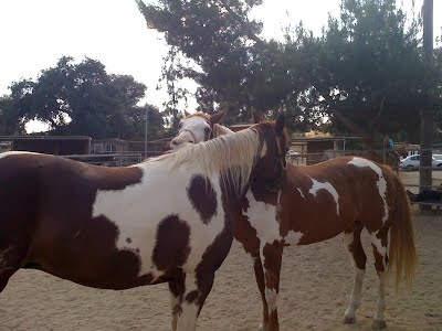 Horse Massage Therapy Murrieta
