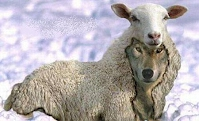 Beware of false prophets which come to you in sheep's clothing, but inwardly they are ravening wolves.