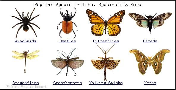 the characteristics of spiders a species found in all environments A closely related sister species not found in environment dark spiders can characteristics with other ecomorph species — they.