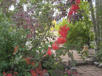 Flower gardens at the Old 1862 Ranch