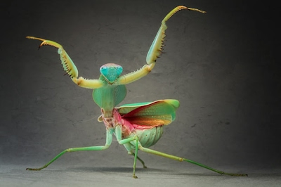 Defense Mechanisms The Praying Mantis