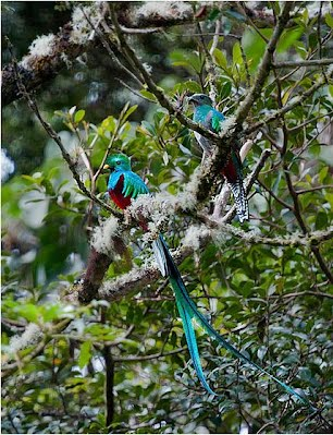 Evolution - The Resplendent Quetzal