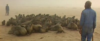 Namibian Seal Hunt, What not to do in Namibia