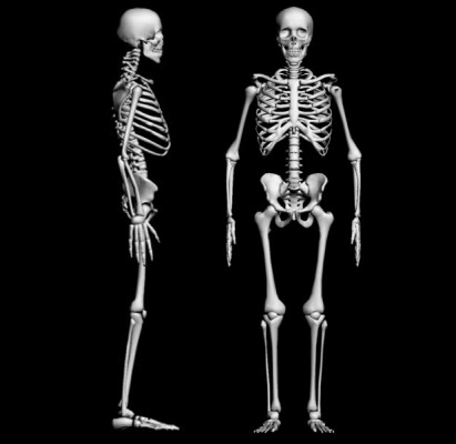 Fun Facts - The Skeletal System