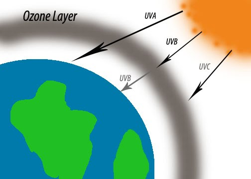 the importance of the ozone layer Without the filtering action of the ozone layer, more of the sun's uv-b radiation would penetrate the atmosphere and would reach the earth's surface many experimental studies of plants and.