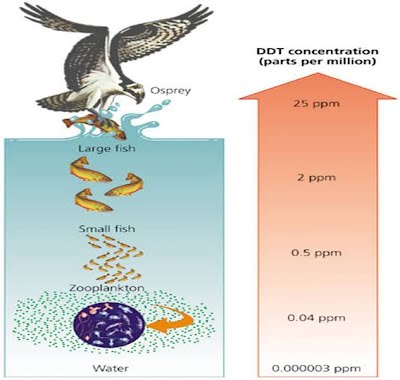 Osprey barrier island ecology uncw for Fish with least mercury