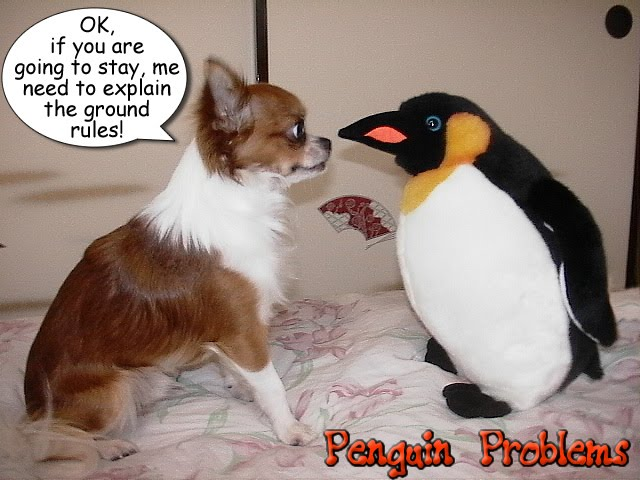 From TigerSan's PhotoBlog: Penguin Problems: OK, if you are going to stay, me need to discuss the ground rules!
