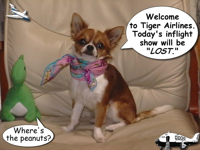 From TigerSan's PhotoBlog: Welcome to Tiger Airlines. Today's inflight show will be LOST.