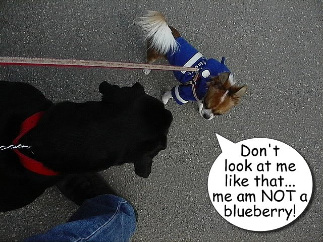 From TigerSan's PhotoBlog: Don't look at me like that... me am not a blueberry!
