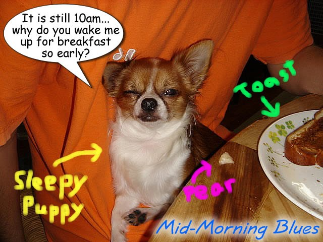 From TigerSan's PhotoBlog: It is still 10am... why do you wake me up for breakfast so early? Morning Blues: Sleepy Puppy, toast, pear