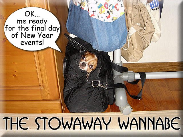 From TigerSan's PhotoBlog: OK... me ready for the final day of New Year events! The Stowaway Wannabe